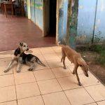 1st-trip-dogs